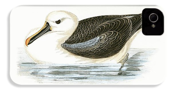 Yellow Nosed Albatross IPhone 4s Case by English School