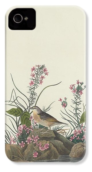 Yellow-winged Sparrow IPhone 4s Case by Rob Dreyer