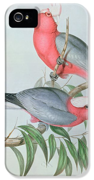 Cockatoo iPhone 5 Case -  Birds Of Asia by John Gould