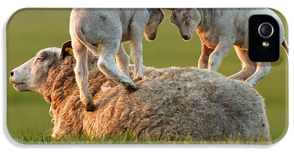Leap Sheeping Lambs IPhone 5 Case by Roeselien Raimond