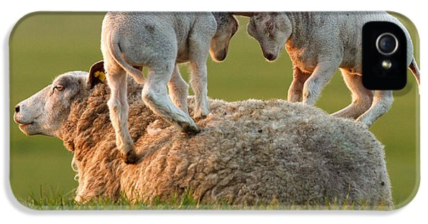 Sheep iPhone 5 Case -  Leap Sheeping Lambs by Roeselien Raimond