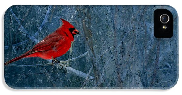 Northern Cardinal IPhone 5 Case by Thomas Young