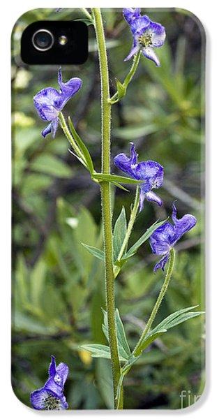 Aconitum Columbianum IPhone 5 Case