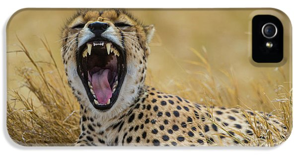 Africa Tanzania Cheetah (acinonyx IPhone 5 Case