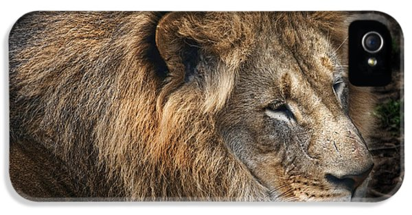 African Lion IPhone 5 Case