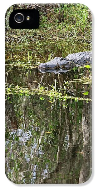Alligator In Swamp IPhone 5 / 5s Case by Jim West