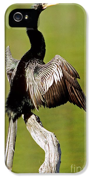 Anhinga Anhinga Anhinga Drying Plumage IPhone 5 Case by Millard H. Sharp