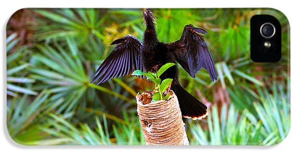 Anhinga Anhinga Anhinga On A Tree IPhone 5 Case