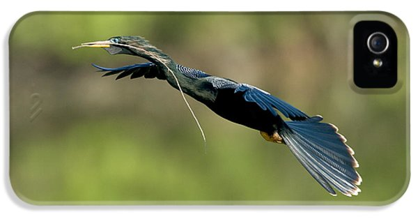 Anhinga IPhone 5 Case by Anthony Mercieca