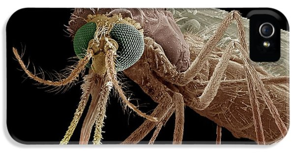 Anopheles Mosquito IPhone 5 Case by Clouds Hill Imaging Ltd