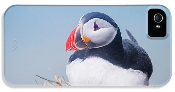 Atlantic Puffin Fratercula Arctica IPhone 5 / 5s Case by Panoramic Images