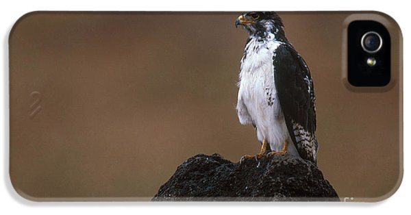 Augur Buzzard IPhone 5 / 5s Case by Art Wolfe