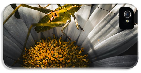 Australian Grasshopper On Flowers. Spring Concept IPhone 5 Case by Jorgo Photography - Wall Art Gallery