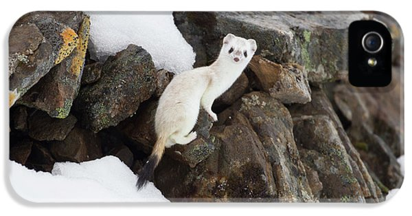 Brooks Range, Arctic National Wildlife IPhone 5 Case by Hugh Rose