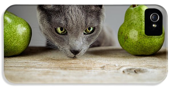 Cat And Pears IPhone 5 Case by Nailia Schwarz