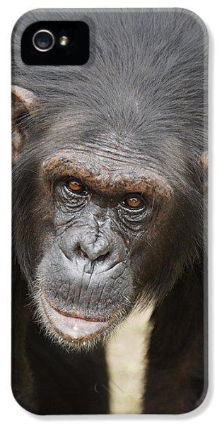 Chimpanzee Portrait Ol Pejeta IPhone 5 / 5s Case by Hiroya Minakuchi