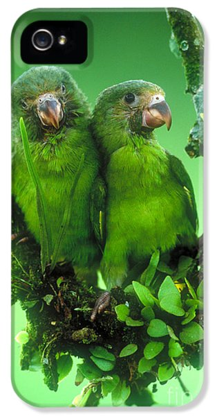 Cobalt-winged Parakeets IPhone 5 / 5s Case by Art Wolfe