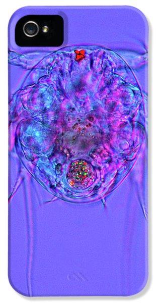 Copepod Larva IPhone 5 Case by Marek Mis