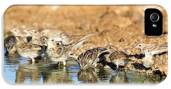 Corn Bunting Emberiza Calandra IPhone 5 / 5s Case by Photostock-israel