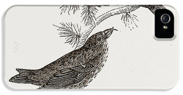 Crossbill iPhone 5 Case - Crossbills by Litz Collection
