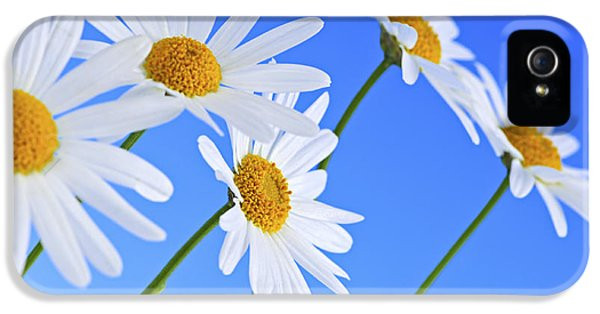 Daisy Flowers On Blue Background IPhone 5 / 5s Case by Elena Elisseeva