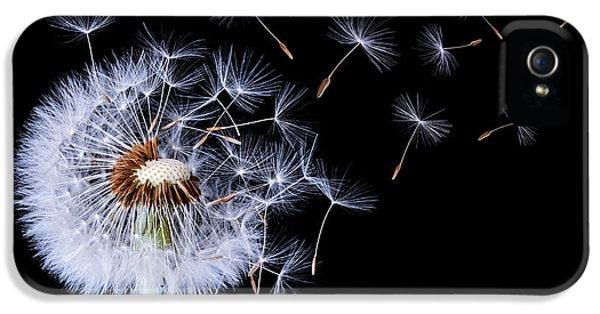 Dandelion Blowing IPhone 5 Case