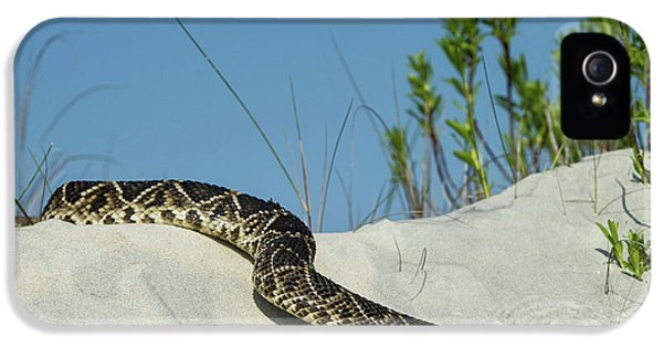 Eastern Diamondback Rattlesnake IPhone 5 Case by Pete Oxford