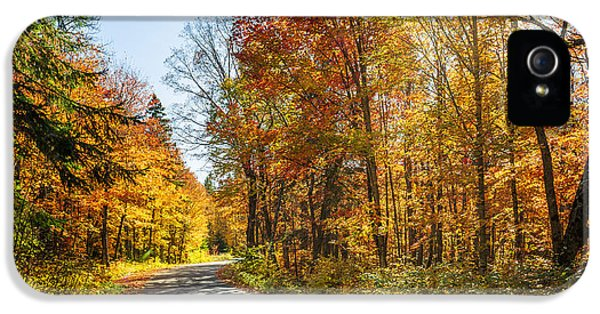Fall Forest Road IPhone 5 Case