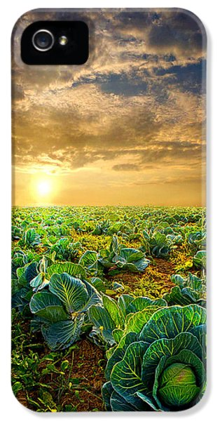 Fall Harvest IPhone 5 Case by Phil Koch