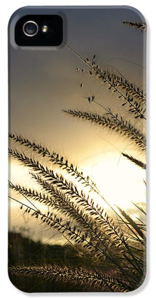 Field Of Dreams IPhone 5 Case by Laura Fasulo