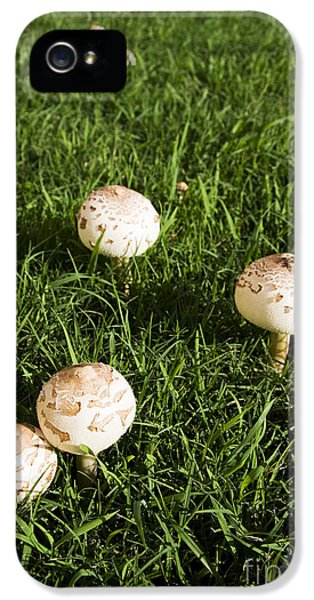 Field Of Mushrooms IPhone 5 Case by Jorgo Photography - Wall Art Gallery