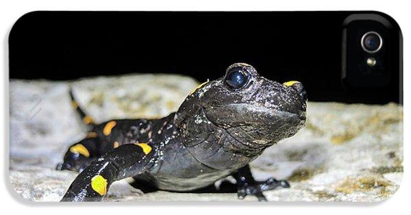 Fire Salamander (salamandra Salamandra) IPhone 5 / 5s Case by Photostock-israel