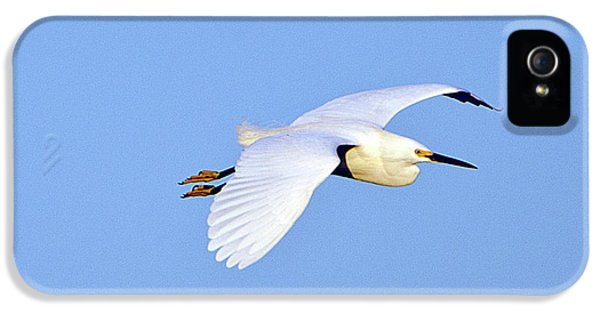 Florida, Venice, Snowy Egret Flying IPhone 5 Case by Bernard Friel