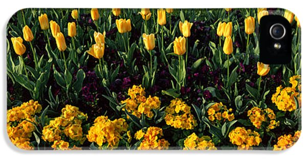 Flowers In Hyde Park, City IPhone 5 / 5s Case by Panoramic Images