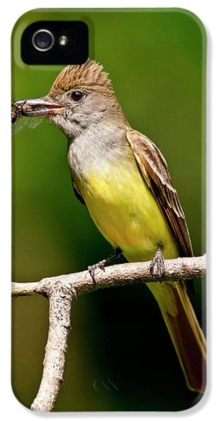 Great Crested Flycatcher Myiarchus IPhone 5 Case