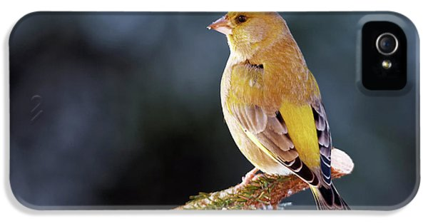 Greenfinch IPhone 5 Case by Heiti Paves