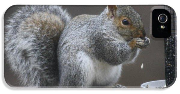 Grey Squirrel At Bird Feeder 7 IPhone 5 Case by Michael Collins