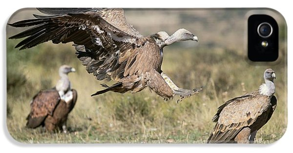 Griffon Vultures IPhone 5 Case by Nicolas Reusens
