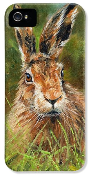hARE IPhone 5 Case by David Stribbling