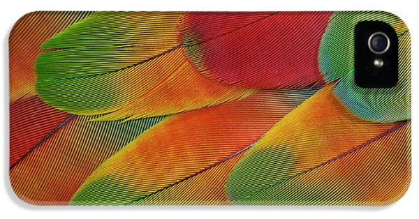 Harlequin Macaw Wing Feather Design IPhone 5 Case by Darrell Gulin