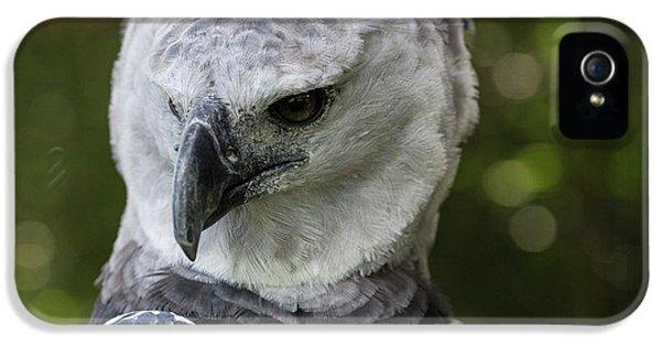 Harpy Eagle, Harpia Harpyja IPhone 5 Case by Jon G. Fuller