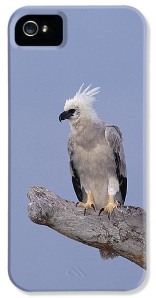 Harpy Eagle iPhone 5 Case - Harpy Eagle Juvenile Silk-cotton Tree by Tui De Roy