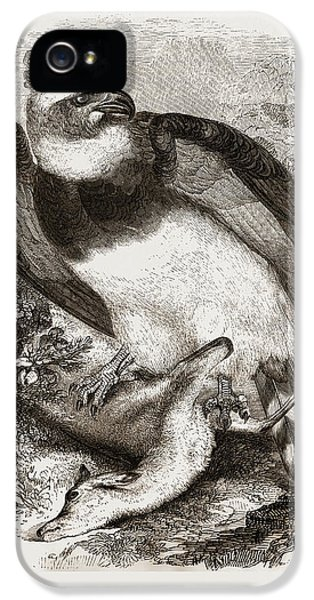 Harpy Eagle IPhone 5 Case by Litz Collection