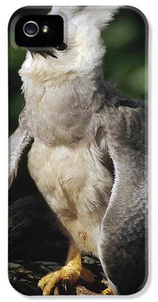 Harpy Eagle iPhone 5 Case - Harpy Eagle Threat Posture Amazonian by Tui De Roy