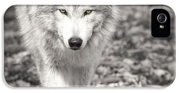 Here's Looking At You IPhone 5 Case by Thomas Young