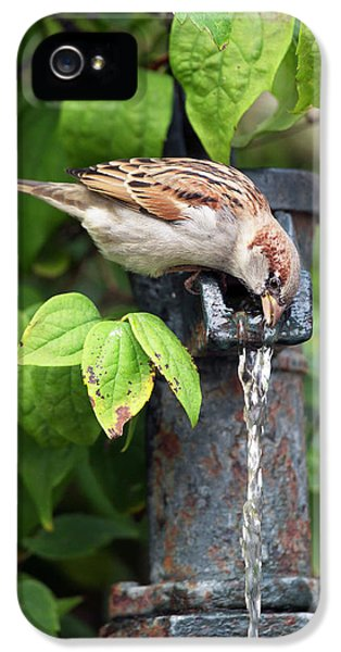 House Sparrow Drinking Water IPhone 5 Case by Simon Booth