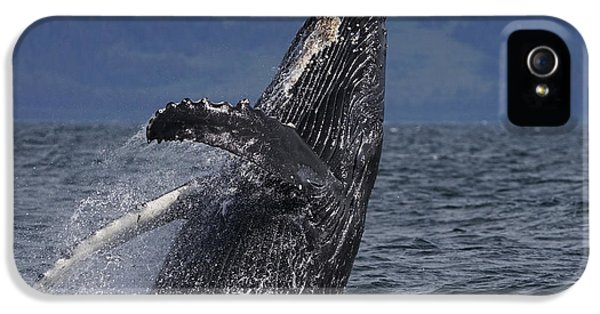 Humpback Whale Breaching Prince William IPhone 5 Case by Hiroya Minakuchi