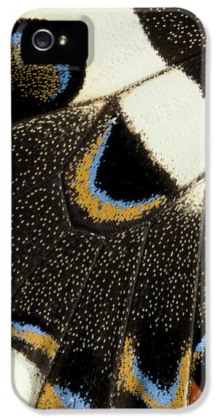 Japanese Swallowtail Wing Markings IPhone 5 Case by Nigel Downer