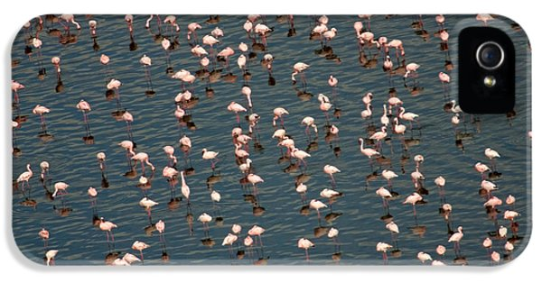 Lesser Flamingo, Lake Nakuru, Kenya IPhone 5 Case by Panoramic Images