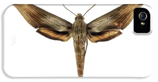 Libya Sphinx Moth IPhone 5 Case by F. Martinez Clavel